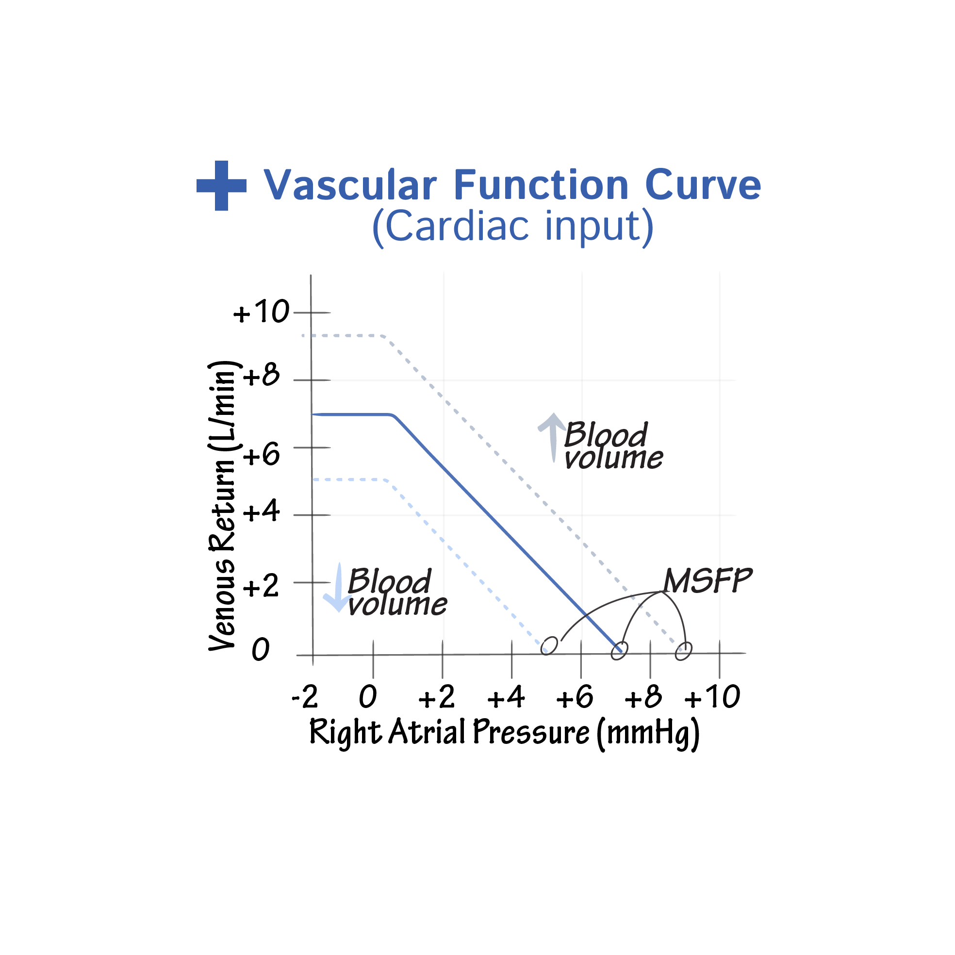 Physiology Glossary Cardiac Output Vascular Function Curves