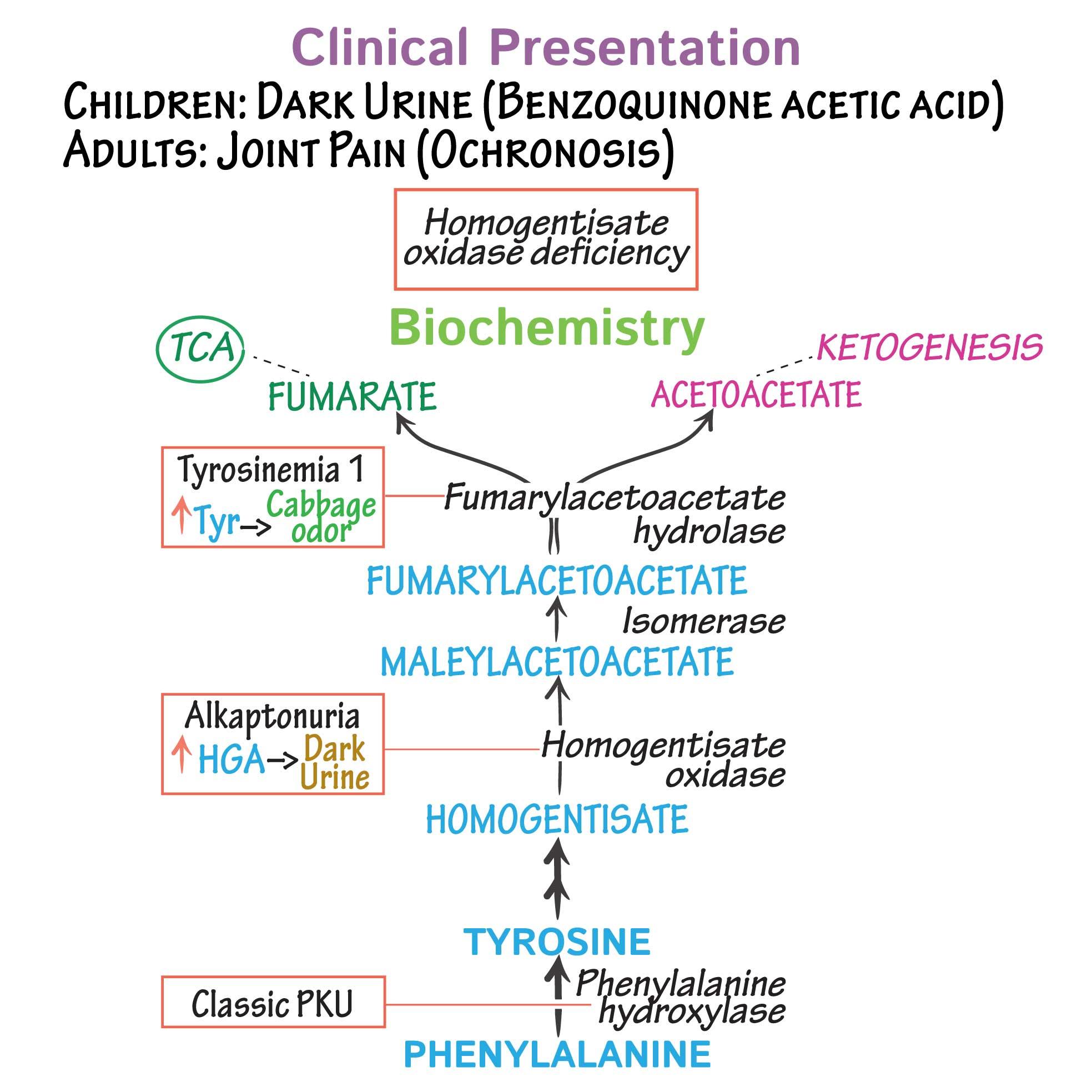 Pathology Glossary: Alkaptonuria   Draw It to Know It