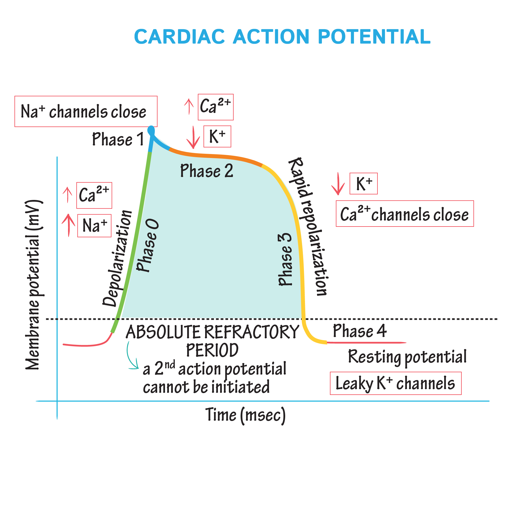 CELL ACTION POTENTIAL EPUB