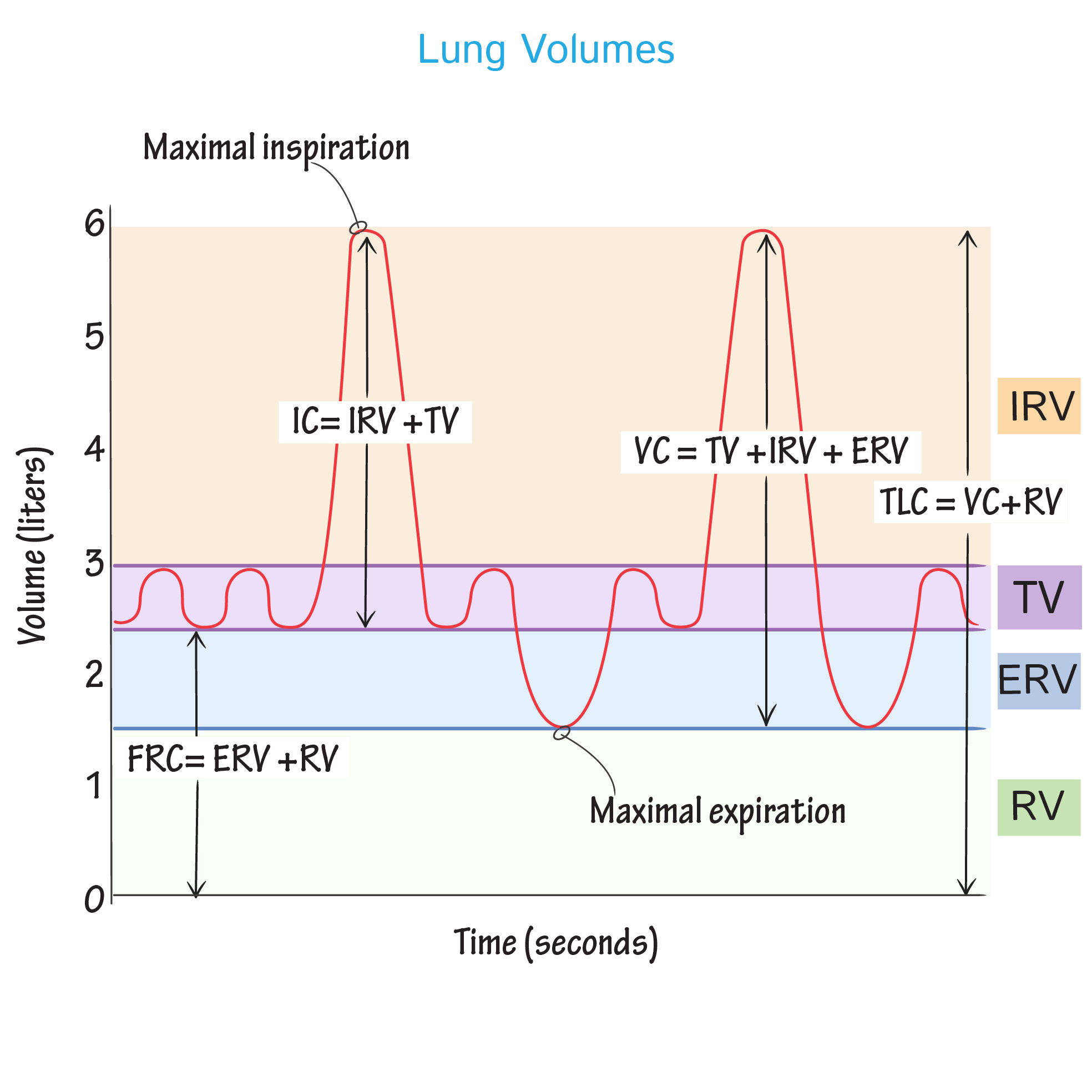 Physiology Glossary Lung Volumes Capacities Draw It To Know It