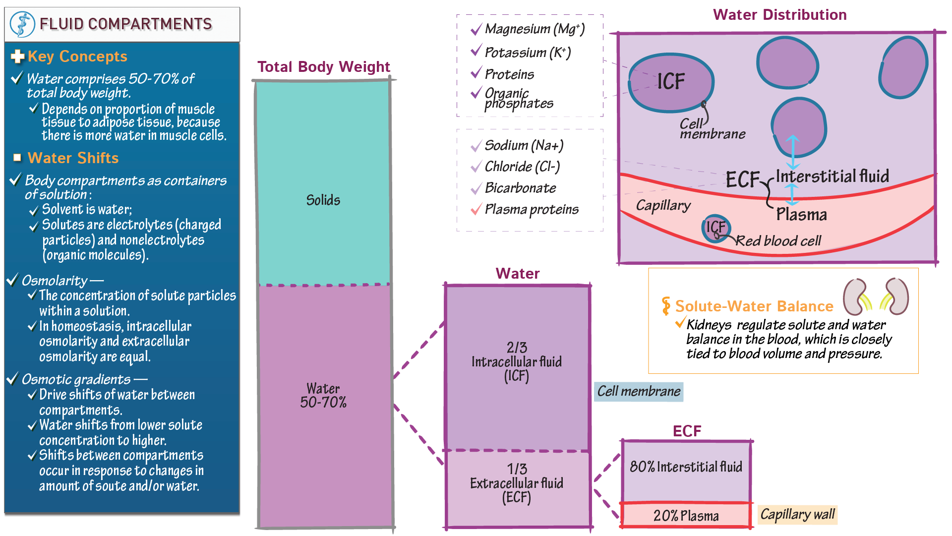 The renal system tutorials draw it to know it body fluid compartments ccuart Image collections
