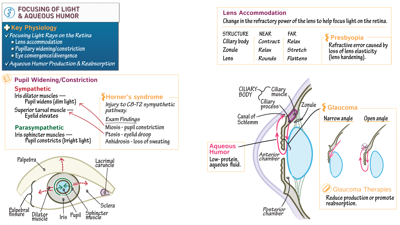 Neurosciences - ABPN Neurology Boards: Focusing Light on the Retina ...