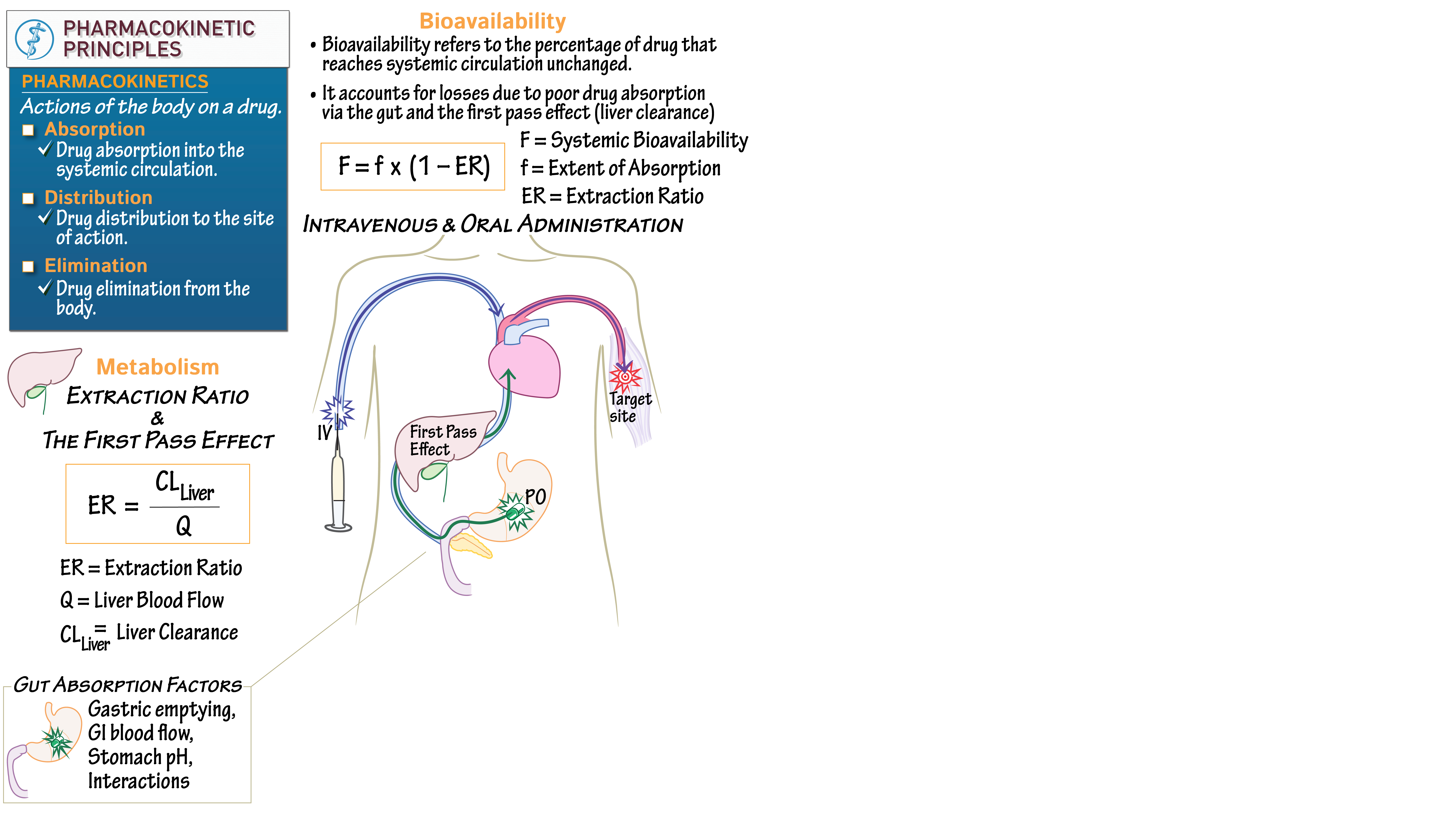 Medical Science For Nurses Pharmacokinetics Bioavailability Metabolism Draw It To Know It