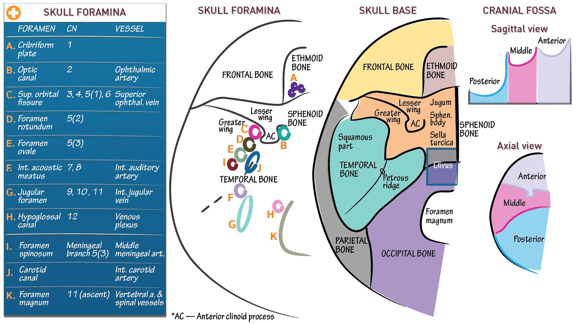 Neuroanatomy: Skull Foramina   Draw It to Know It