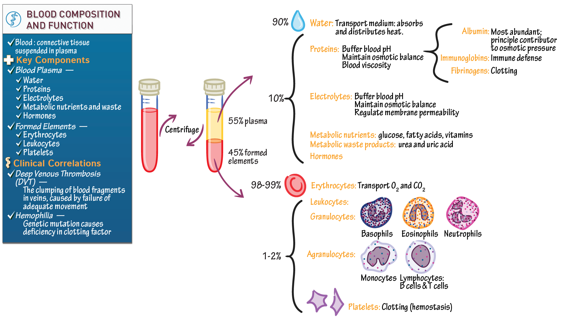 Mcat Biology Biochemistry Blood Composition And Function Draw