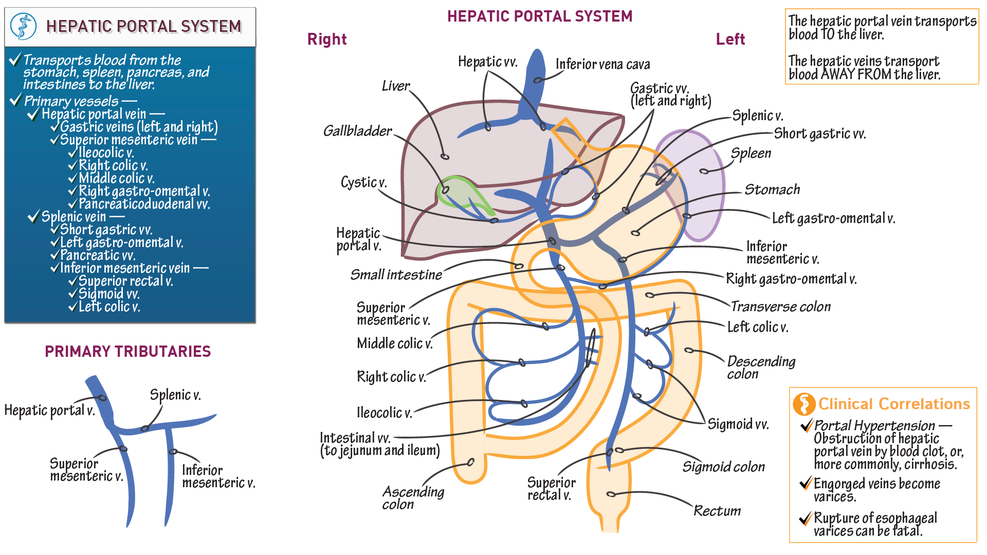 Gross Anatomy Hepatic Portal Venous System Draw It To Know It