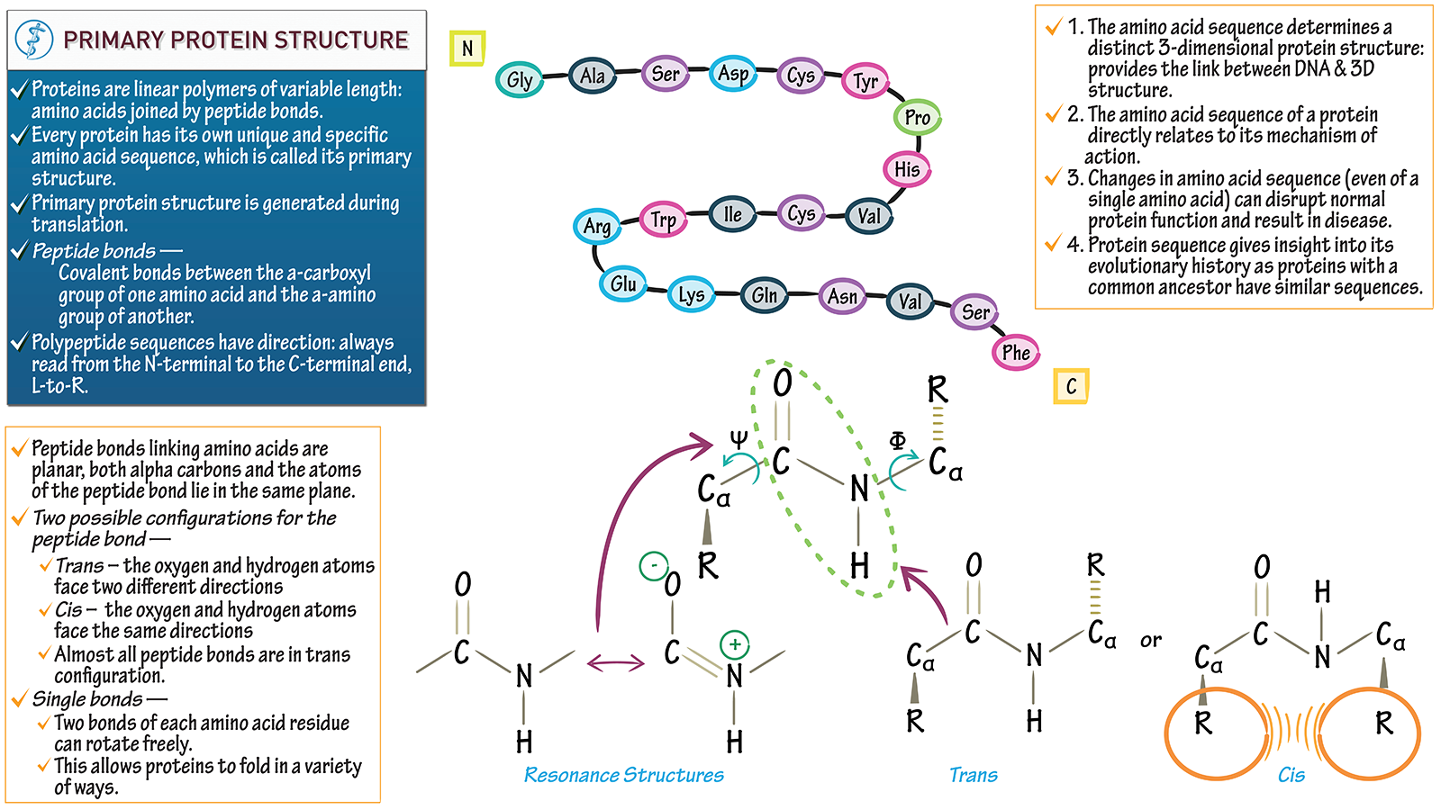 Protein molecule diagram dna electrical drawing wiring diagram cell biology primary protein structure draw it to know it rh drawittoknowit com show a diagram of a dna molecule dna molecule drawing ccuart Gallery