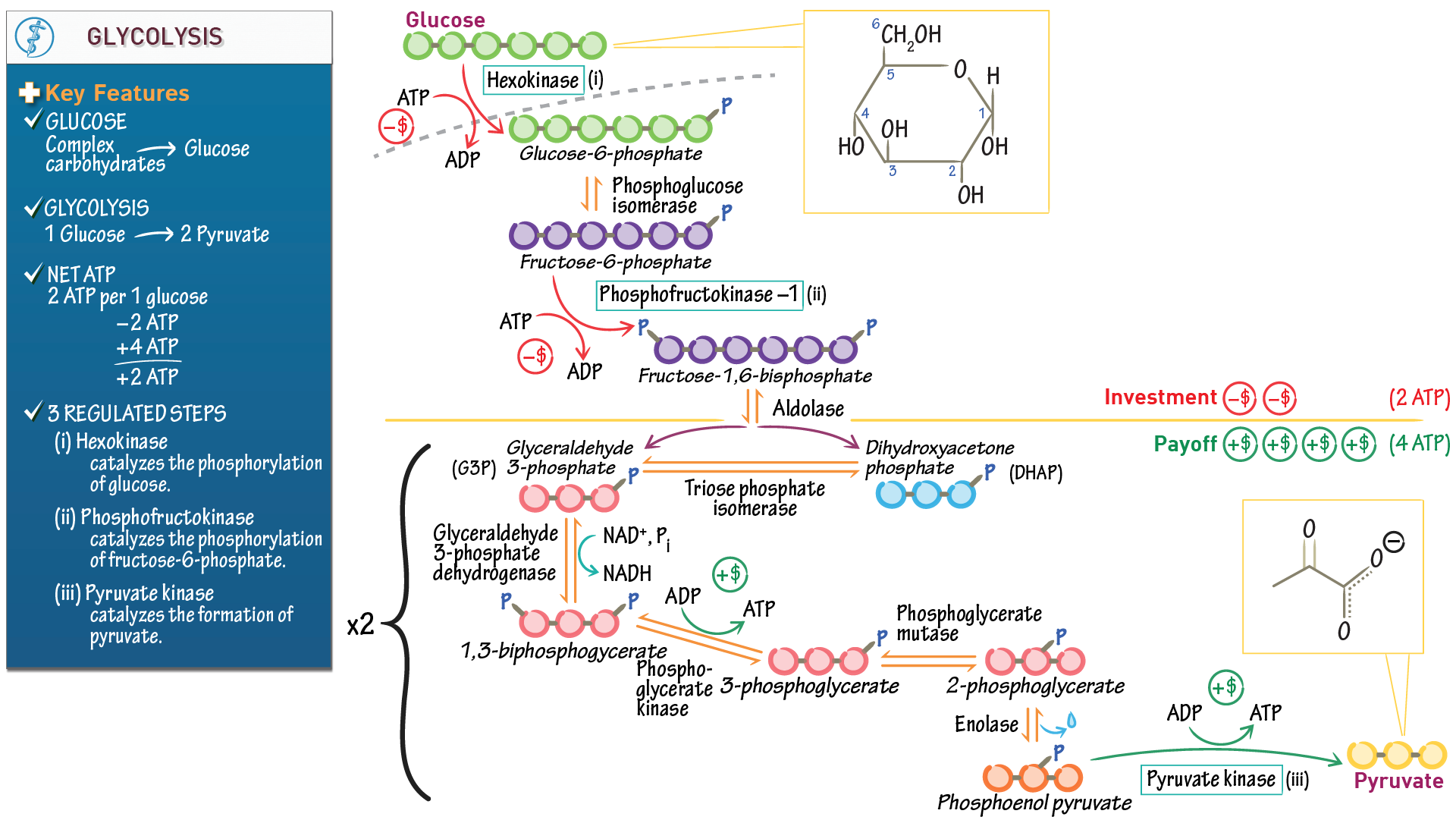 Biochemistry fundamentals glycolysis draw it to know it pooptronica Images